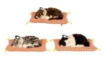 Katze m.'Miau-Miau'-Stimme auf Kissen