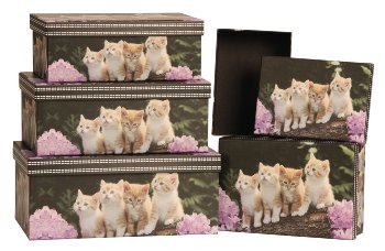 Boxen mit Katzen Motiv 5er-Set-Preis