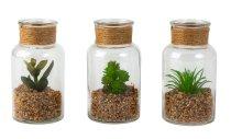 Glas-Flasche mit Kaktus h=13cm d=7cm