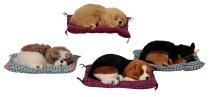 Dog l=25cm with blanket 30x24cm assort.