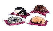 Hund+Katze auf Decke 30x24cm