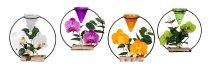 Metalldeko mit Orchideen und