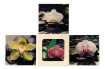 Glasbild 'Orchidee & Steine' 20x20cm